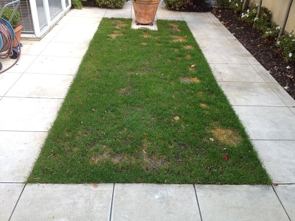 GrassPro
